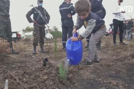 В Алжире после лесных пожаров всем миром сажают деревья