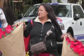 Бурно цветущие пуансеттии привнесли дух Рождества в Мексику