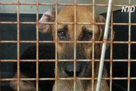 В Колумбии зоозащитники помогают собакам, пострадавшим во время урагана «Йота»