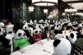 Отпечаток пандемии: в немецком ресторане все столики заняли плюшевые панды