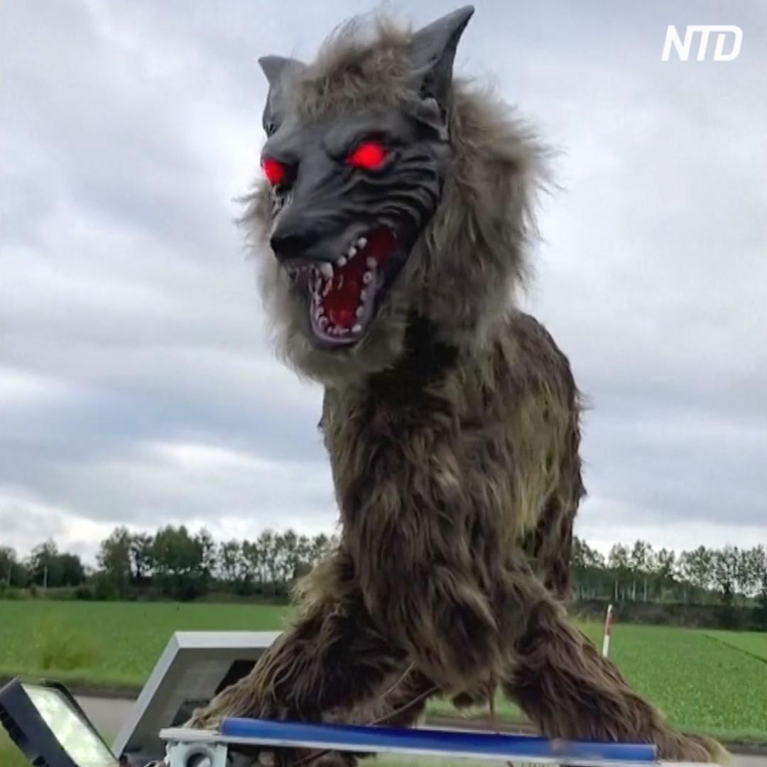 «Монстр-волк» охраняет японцев от нападения медведей