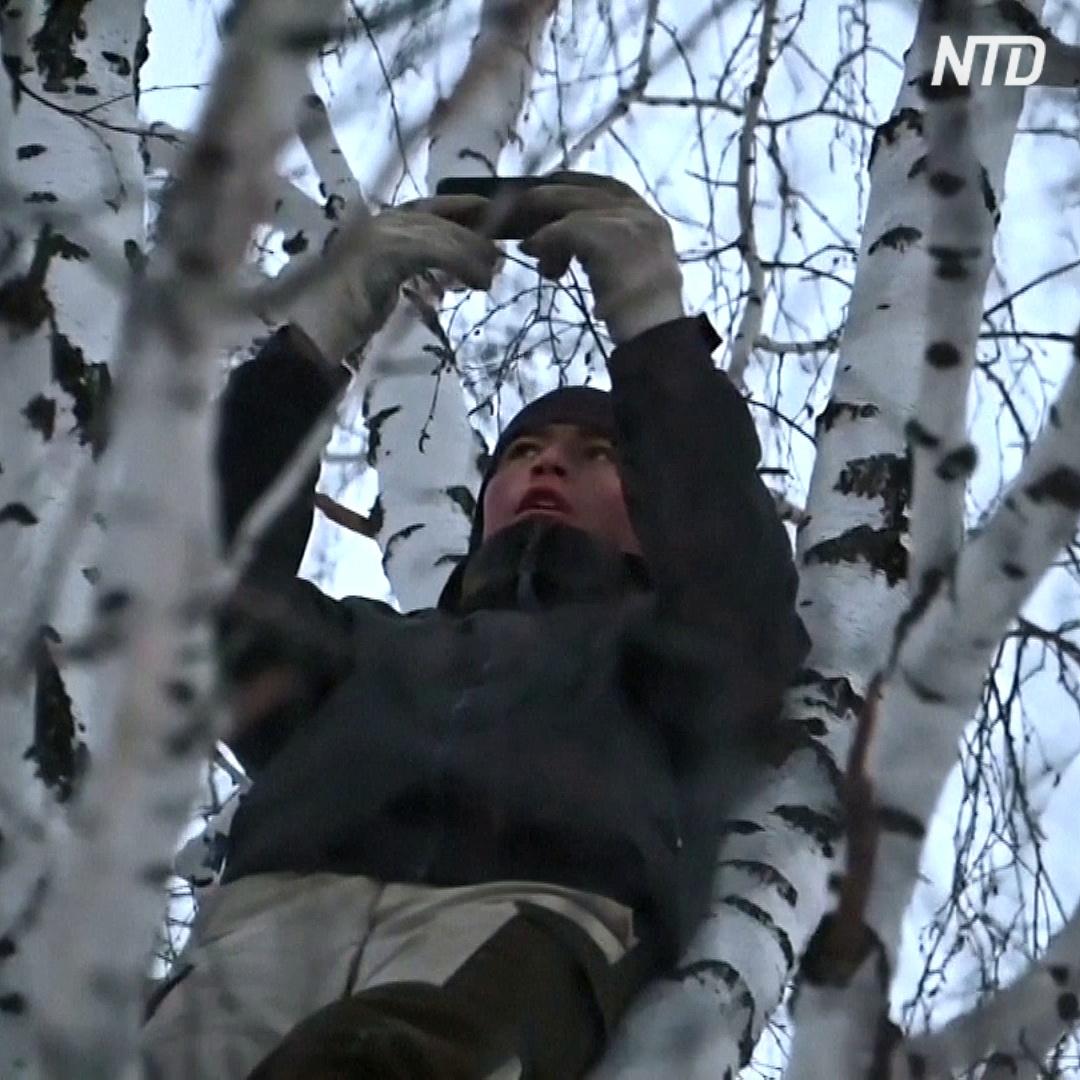Сибирский студент выходит в Интернет, забираясь на берёзу