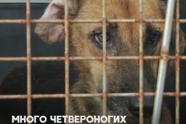 В Колумбии спасают собак, оказавшихся на улицах из-за урагана «Йота»
