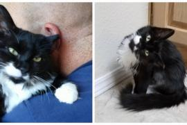 Какой характер оказался у котёнка с наклонённой головой