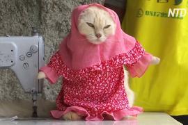 Пушистая мода: индонезиец шьёт забавные наряды для кошек