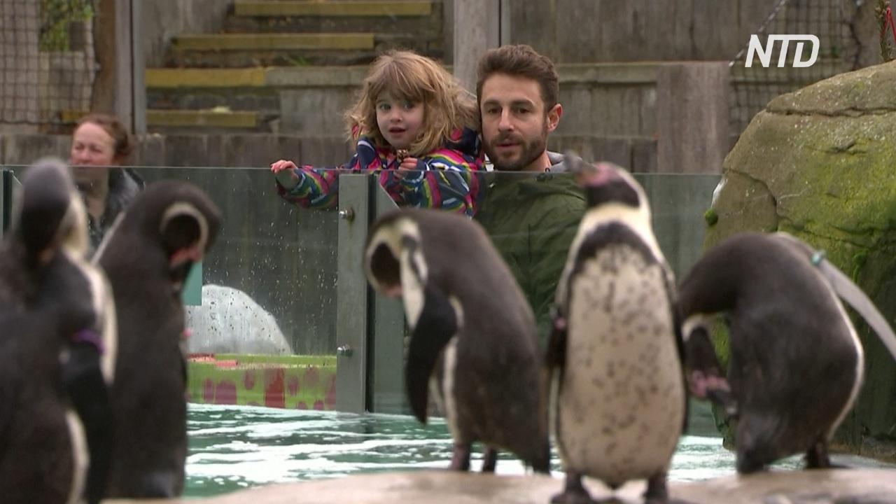 Лондонский зоопарк снова открылся после карантина