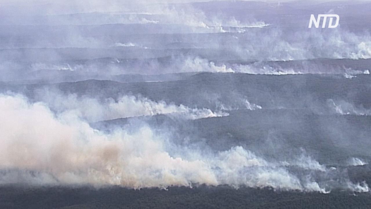 Половина австралийского острова Фрейзер охвачена дымом из-за лесных пожаров