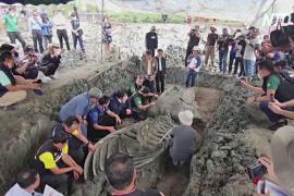 Тайские археологи нашли скелет кита возрастом 5000 лет