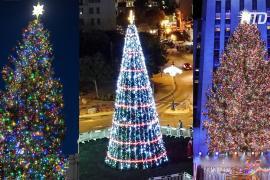 Рождественские ели от Нью-Йорка до Ватикана
