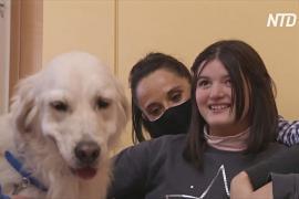 В Испании собаки-терапевты заступили на службу в школы