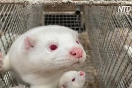 В России завершаются испытания вакцины от COVID-19 для домашних животных