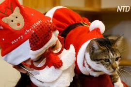 Кошки в костюмах Санты дарят рождественское настроение гостям кафе в Сеуле
