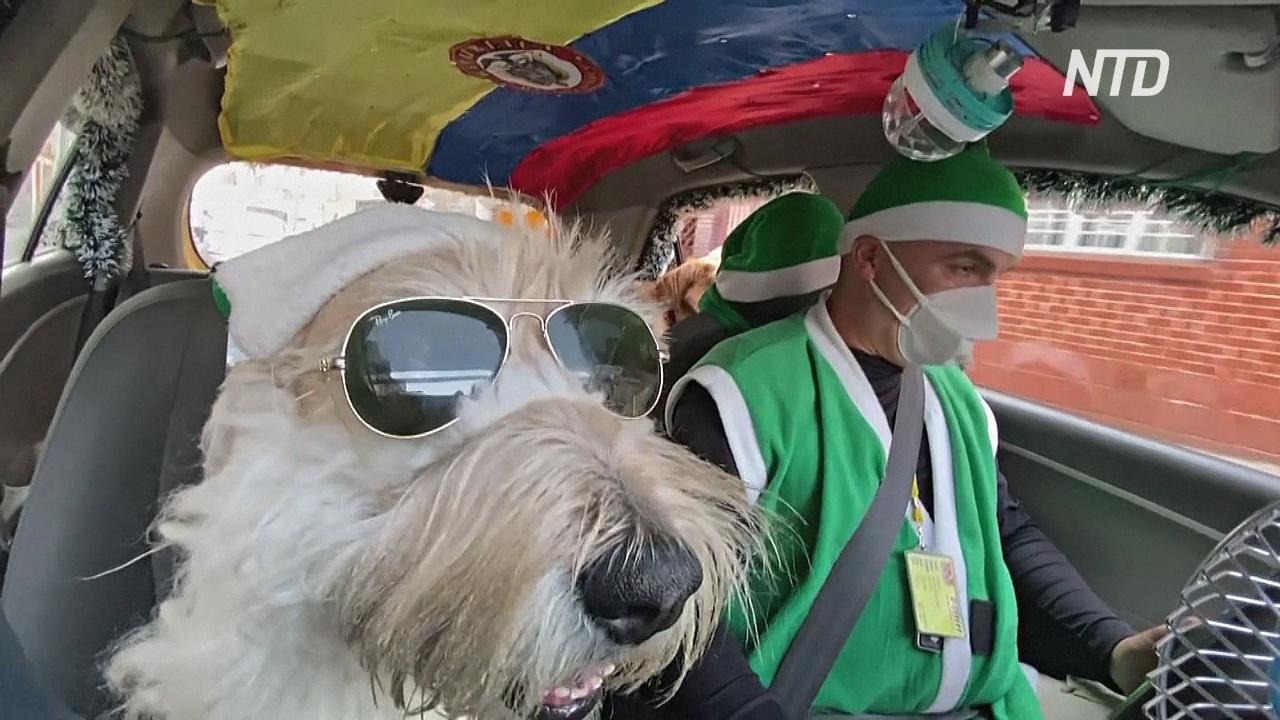 Такси в мишуре и пёс-Санта: колумбиец дарит людям рождественское настроение
