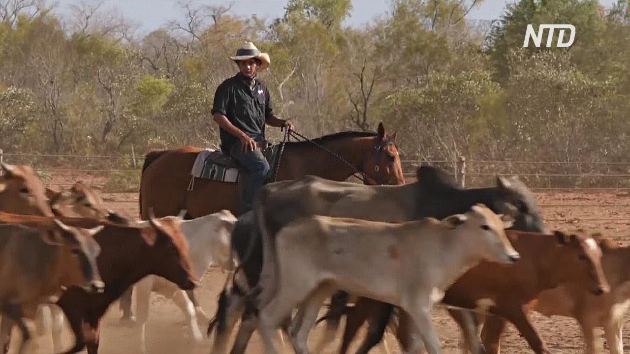 В Австралии обучают новое поколение ковбоев