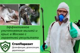 «СтопПаразит» — грызунов удалит