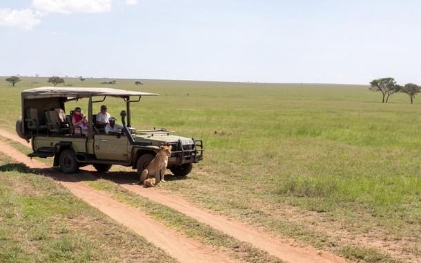 Новогоднее сафари по национальным паркам Танзании