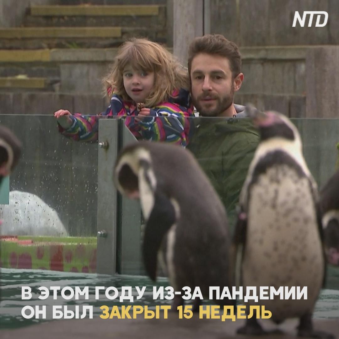 Лондонский зоопарк снова работает после карантина