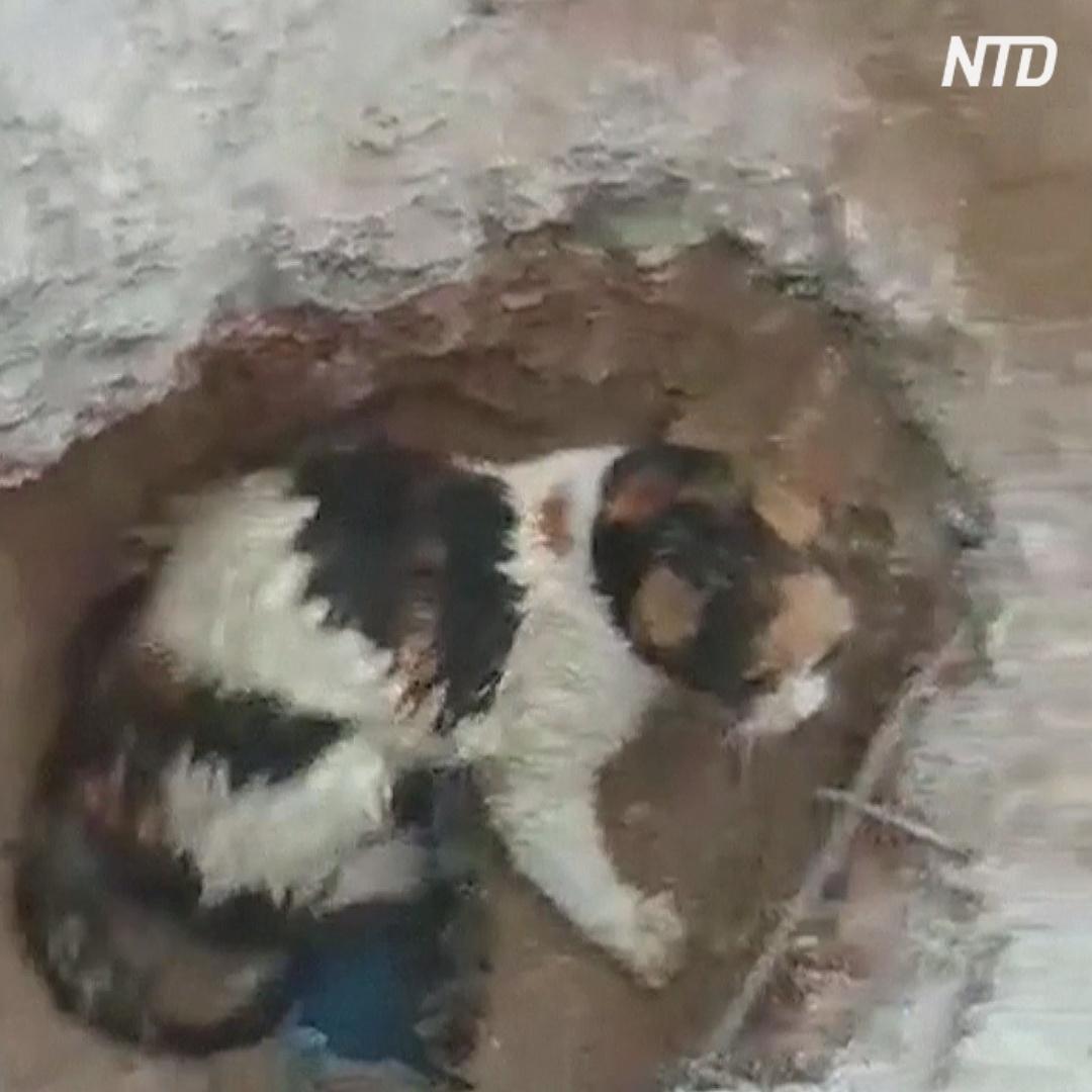 Удивительное спасение: кошка 48 часов провёла под слоем бетона