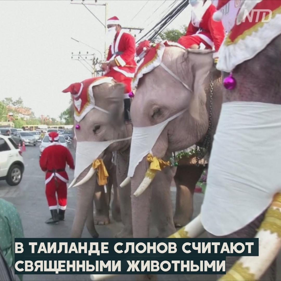 Слоны подарили тайским детям на Рождество защитные маски