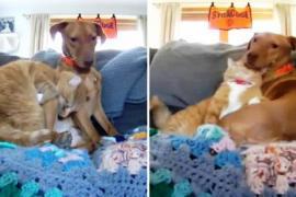 Почему кот утешает пса каждый день