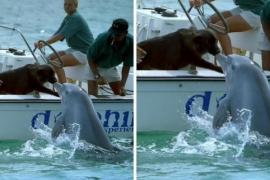 Как дельфин поцеловал собаку