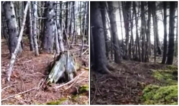 Как выглядит «дыхание» земли в лесу. Необычное видео