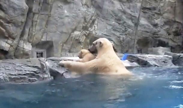 2 - Как медведица учила медвежонка самостоятельности