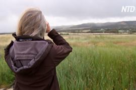 В Южной Австралии волонтёры восстанавливают экосистему водно-болотных угодий