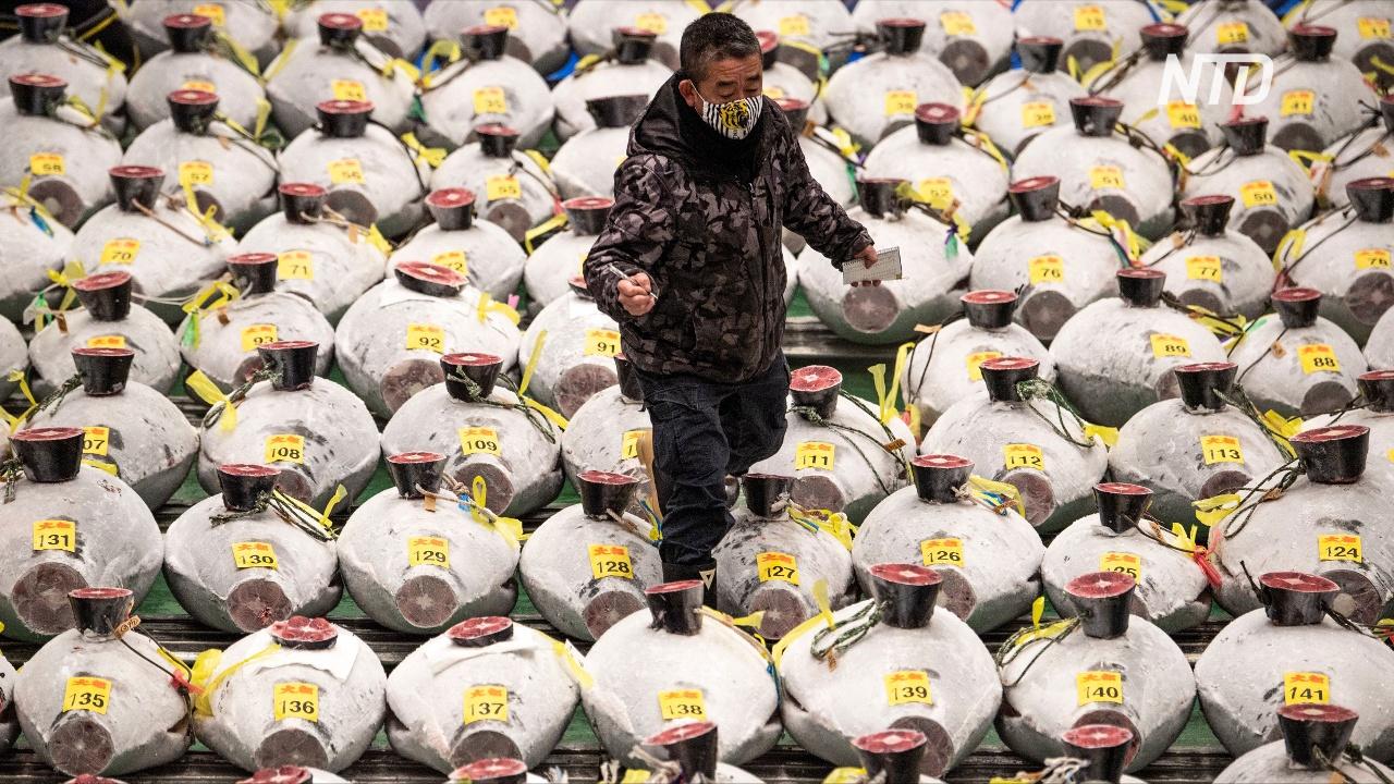 Аукцион голубого тунца в Токио: цены упали на 90%