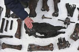 Уральские дайверы поднимают со дна Тобола кости вымерших животных