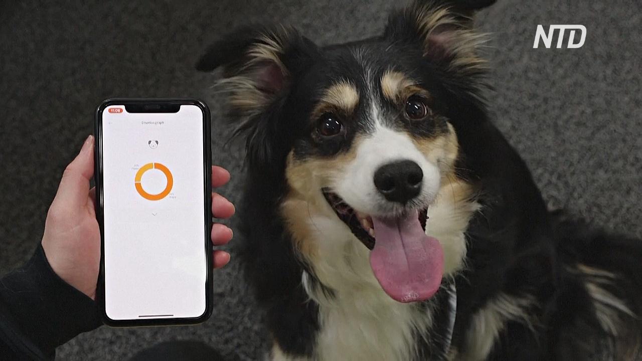 Южнокорейский «умный» ошейник переводит хозяевам лай собак