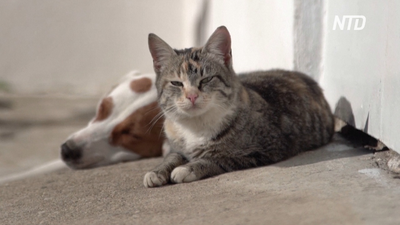 Собака в греческой деревне кормит молоком кошек