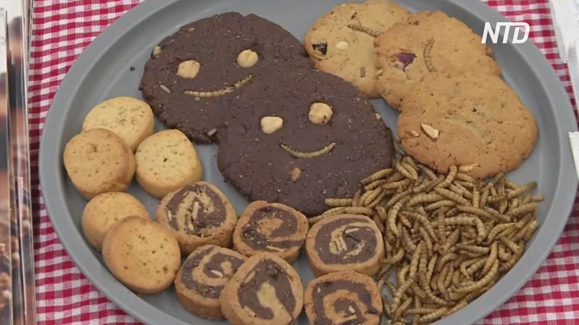 В Евросоюзе одобрили употребление в пищу мучных червей