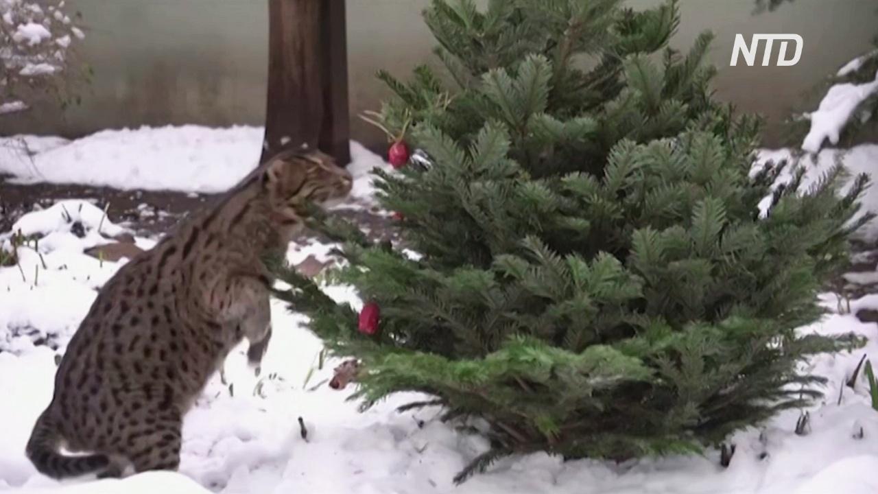 Как питомцы Таллиннского зоопарка наслаждаются зимней погодой