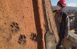 На черепице купола флорентийского собора нашли следы животных