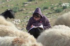 Дети бедуинов на Западном берегу не могут посещать онлайн-занятия