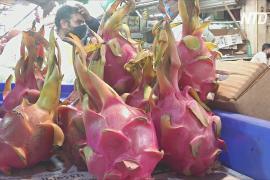 Индийский штат переименовал драгонфрут, чтобы название не было китайским