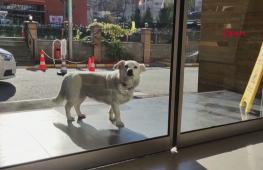 В Турции собака неделю верно ждала хозяина у больницы