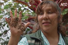 Двое боливийцев создали заповедник для спасения пчёл