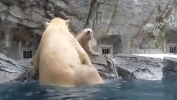 3 - Как медведица учила медвежонка самостоятельности