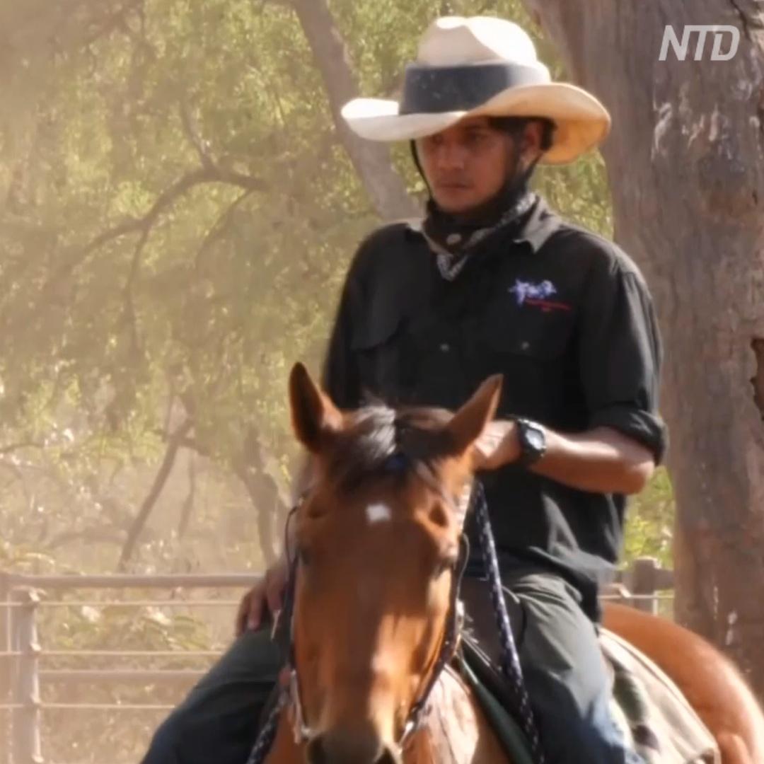 Новое поколение австралийских ковбоев: обучаются с нуля, схватывают всё на лету