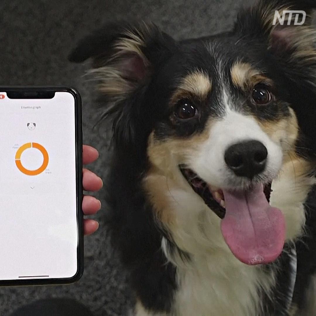 «Умный» ошейник расшифровывает для владельцев эмоции собаки