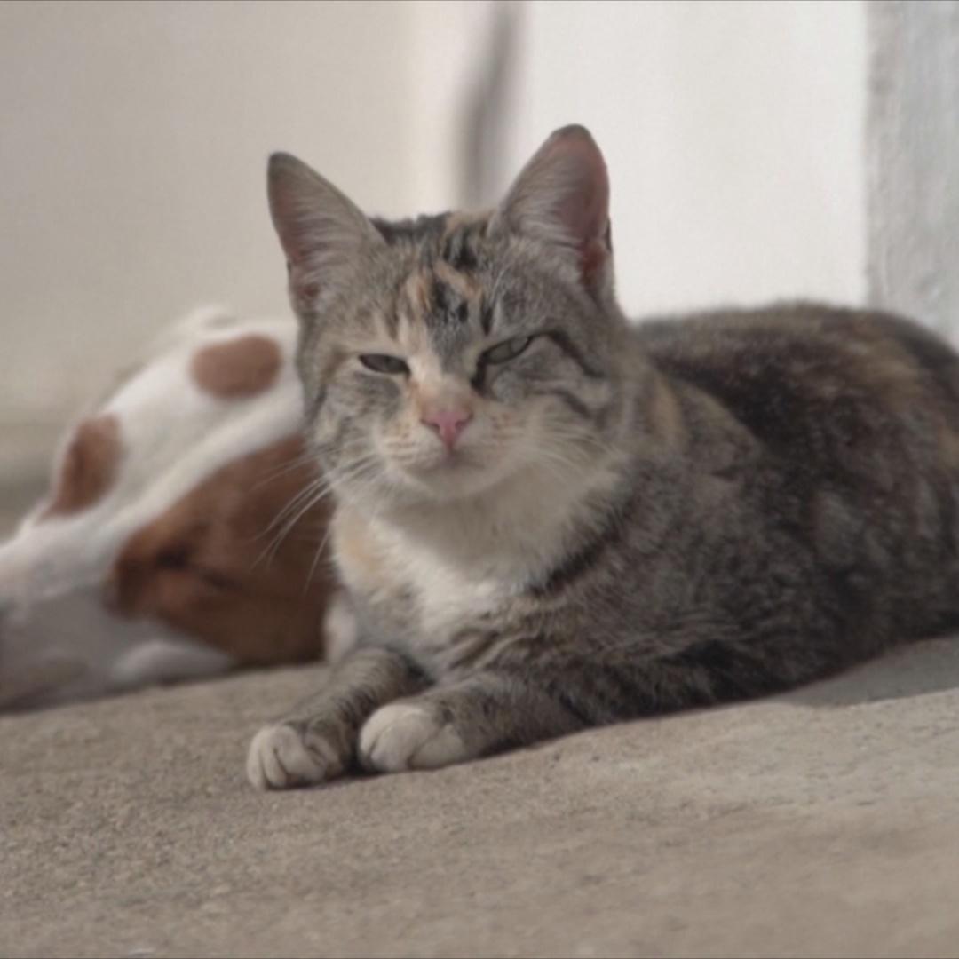 Греческая собака кормит молоком взрослых кошек