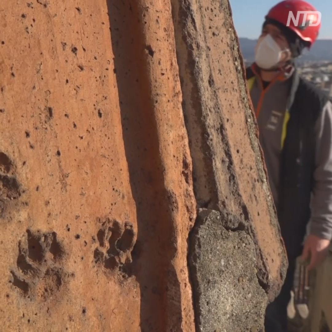 На черепице купола собора во Флоренции нашли следы животных
