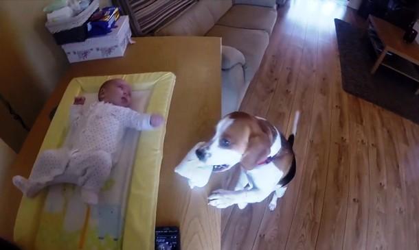 Novyj risunok 1 5 - Как пёс помогает менять подгузники младенцу. Весёлое видео.