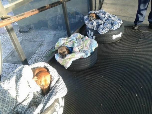 Novyj risunok 1 8 - Бразилия: зачем бездомным собакам открыли двери автовокзала