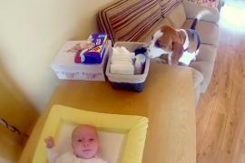 Как пёс помогает менять подгузники младенцу. Весёлое видео.