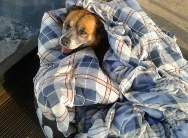 Novyj risunok 2 14 - Бразилия: зачем бездомным собакам открыли двери автовокзала