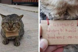 Где кошка пропадала три дня, узнали благодаря записке