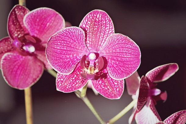 Orhideya - Домашний оазис